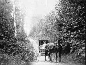 Horse and carriage in Green Timbers